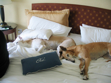 Petfriendly Hotels Dog Friendly